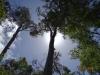Karri Valley Pemberton Western Australia